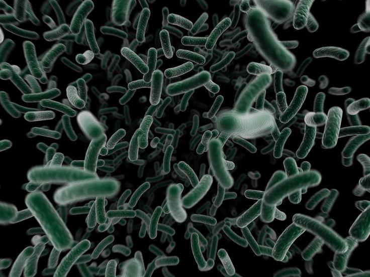 PURIFICACION DE AIRE AIRLIFE TE DICE Los hongos patógenos son a menudo dimorfismo, lo que significa que puede crecer, ya sea como mohos o levaduras, dependiendo de la temperatura, se desarrollan a temperatura del cuerpo humano y lo hacen bien en las condiciones húmedas que se encuentran en los tejidos humanos.
