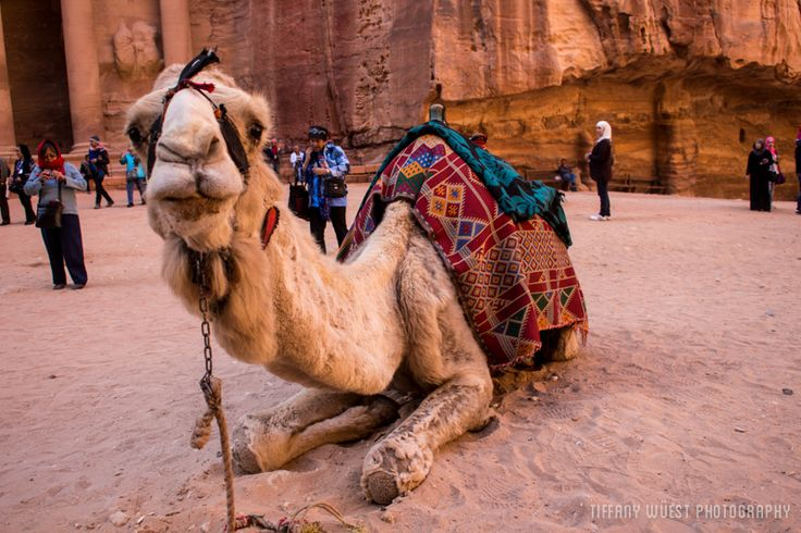 A Day in Petra: The Red Rose City of Stone