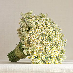 Sweet Simplicity Bouquet - Perfect for a barn wedding, a mass of chamomile and astrantia makes a big impact and is a smart choice for the budget-minded bride.