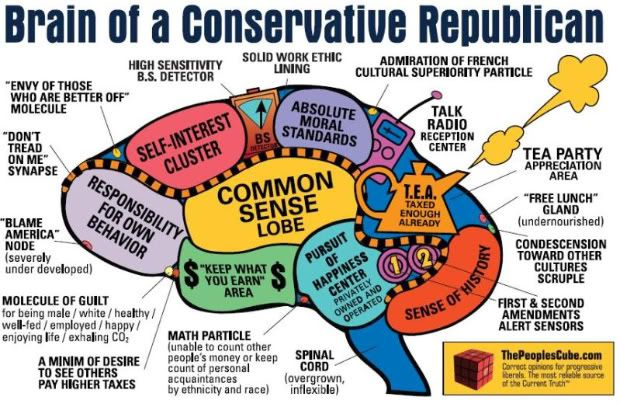Conservative brain: Brain Functional, Conservation Republican, Capitalist Republican, Funny Stuff, Conservation Brain, Brain Maps, Funny Posters, Kids Funny, Republican Brain