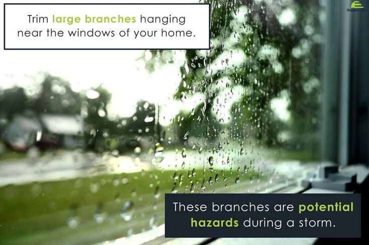 Home Tip of the day: Trim Larger branches hanging near the window of your home. << #SupplyExpert #ElectricalSupplies