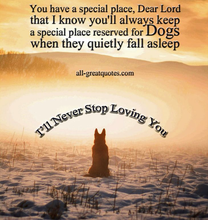 You have a special place, Dear Lord that I know you'll always keep a special place reserved for Dogs when they quietly fall asleep - In Loving Memory - Pet Loss - Dog Poems