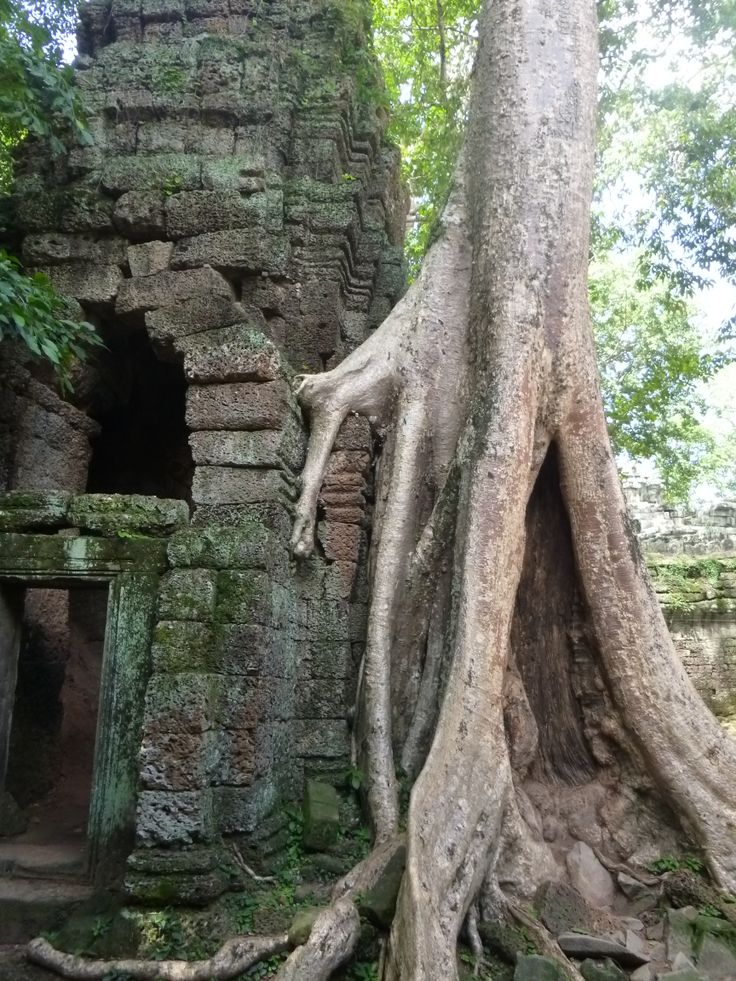 Ta Prohm in Angkor, Siem Reap