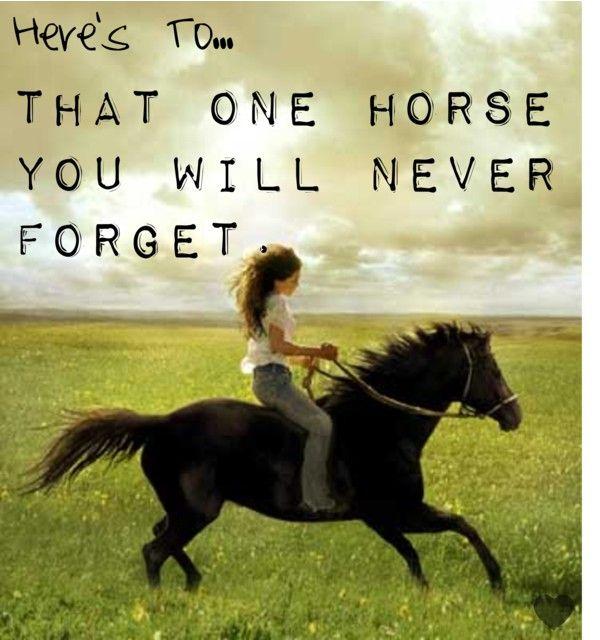 Horse quote