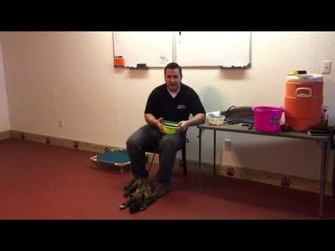 How to train a diabetic alert dog! Scent imprinting. - YouTube