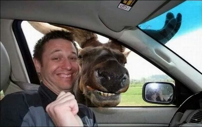 22 of the Most Insanely Funny Animal Photobombs