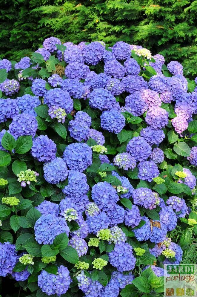 Quand Planter Les Hortensias Hortensias Les Planter Quand Large Outdoor Planters Self Watering Planter Herb Planters