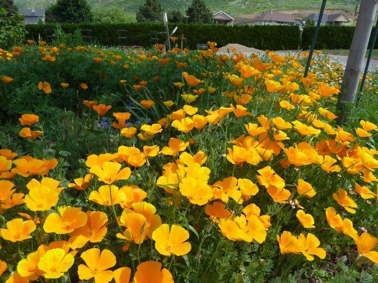 Ogden nature center date free days: http://www.co.weber.ut.us/ramp/pdf_2013/RAMP%20tax%20summer%20schedule%202013%20final.pdf