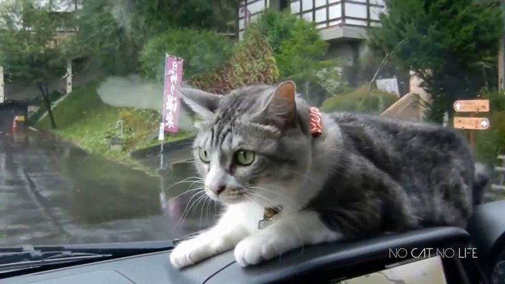 Χωρίς τις γάτες τι γίνεται? Αστείες γάτες !