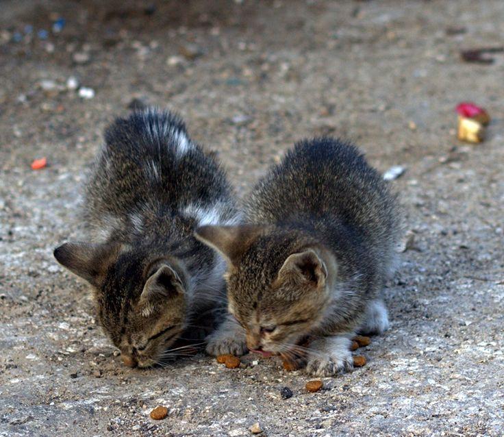 Kittens spring 2017