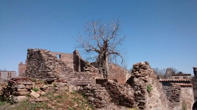 Some trees stand among the ruins
