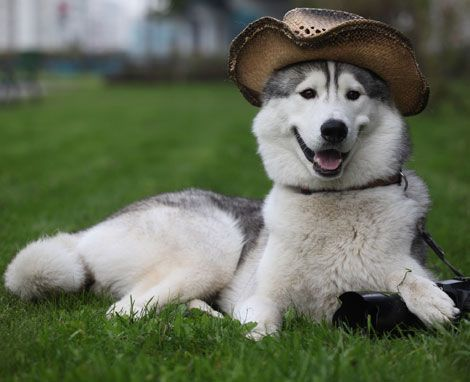 Купить забавные смешные костюмы для собак в интернет магазине Lux Dogs