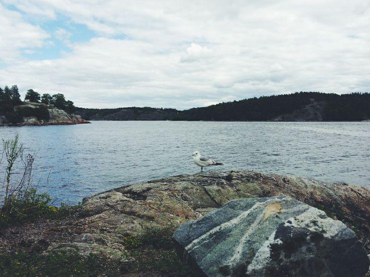 Stockholm archipelago, sea gull