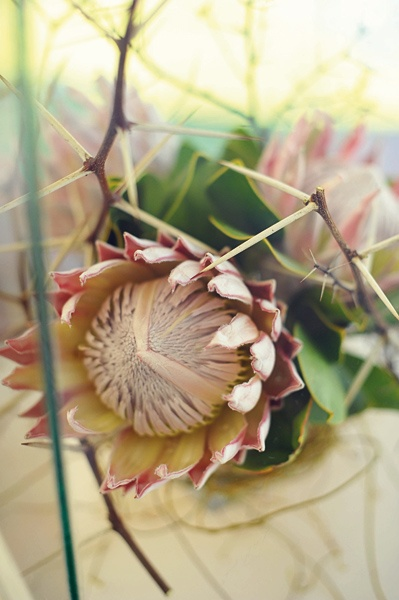 Christmas in South Africa: Proteas and thorns make a stunning centrepiece for a festive table...