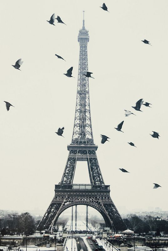 Tour Eiffel. Paris pigeons and the Eiffel tower. Inspiration for your Paris vacation from Paris Deluxe Rentals