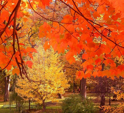 jgvhg: Leaves Fall, Fall Colors, Fall My Favorite, Nyc, Autumn Colors, Central Park, Park Leaves