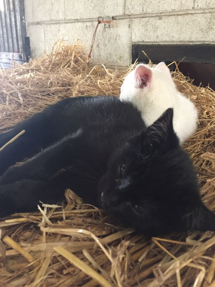 Kittens sleeping in the straw