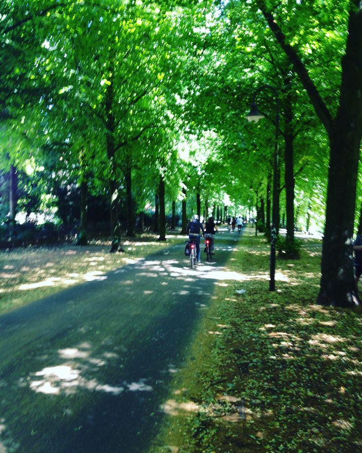 """""""Promenade"""" MÜNSTER. Fahrrad-Highway mitten in der Stadt"""