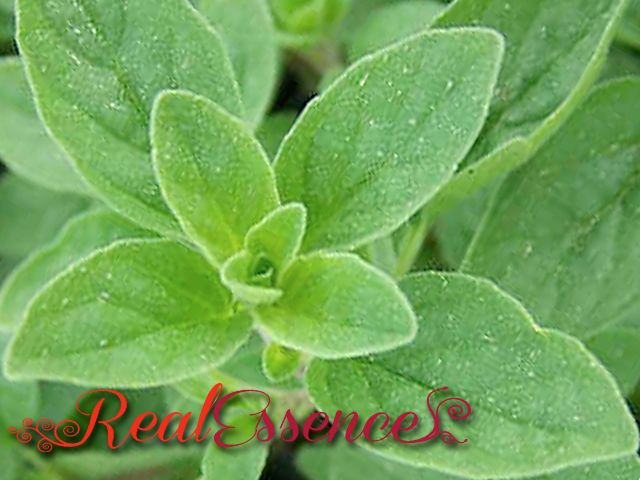 Marjoram♥100%Pure and Natural AROMATHERAPY Essential Oil ♥For Diffuser Spa♥50 ml