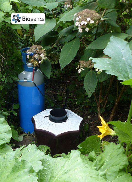 10 besten Mückenfalle für den Garten Bilder auf Pinterest Garten - holzdeko im garten