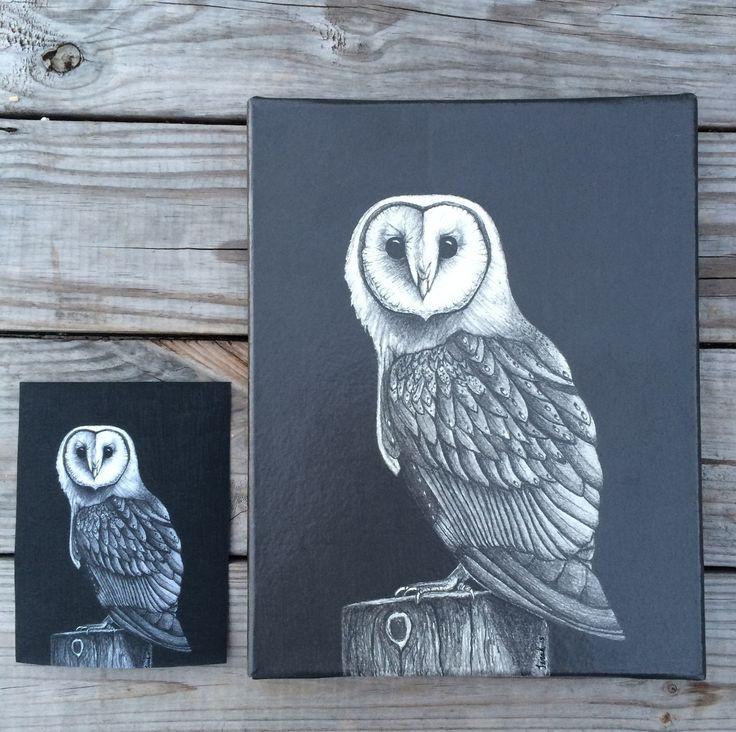 A personal favorite from my Etsy shop! Owl, Owl Art, Owl Decor, Owl Illustration, Owl Drawing, Barn Owl