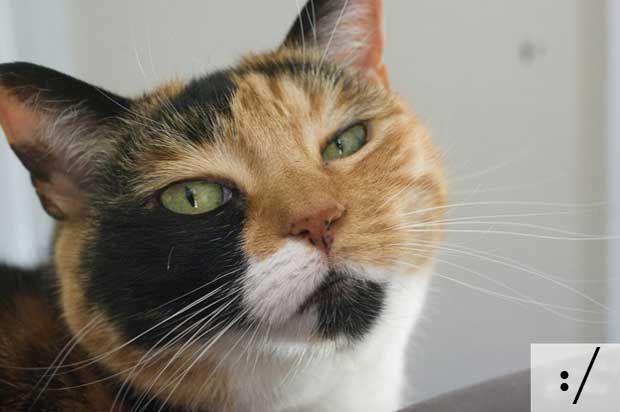 Na verdade, todos os emoticons que conhecemos atualmente foram feitos tendo em base as feições e expressões dos felinos. Uma pena isso ser uma mentirinha.