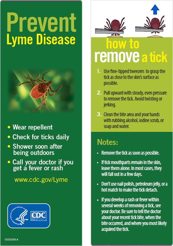 Best Tick Prevention For Dogs Canada