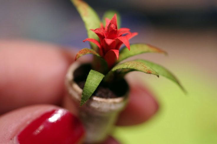 Guzmania Lingulata (Scarlet Star) tutorial in Spanish.. but hey, Google Translate!