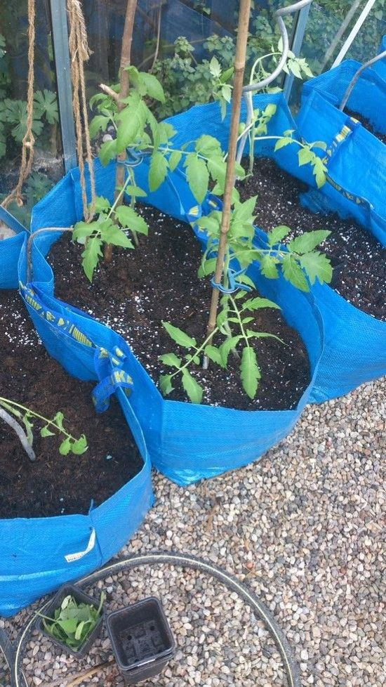 FRAKTA - genius! how to use these fun ikea bags as growbags for tomatoes & other vegetables - IKEA Hackers