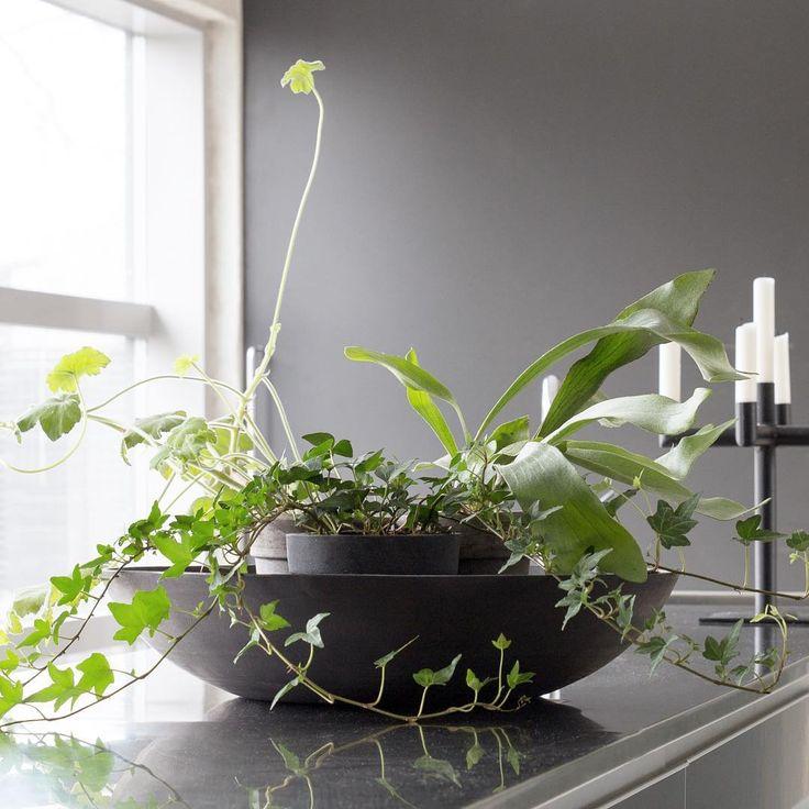 På köksbänken!  #hemmahosmig #myhome #inredning #interior #krukväxter #gråttochgrönt #kök #köksö #ljusstake #murgröna #ivy #pelargon #geranium #älghornsbräken