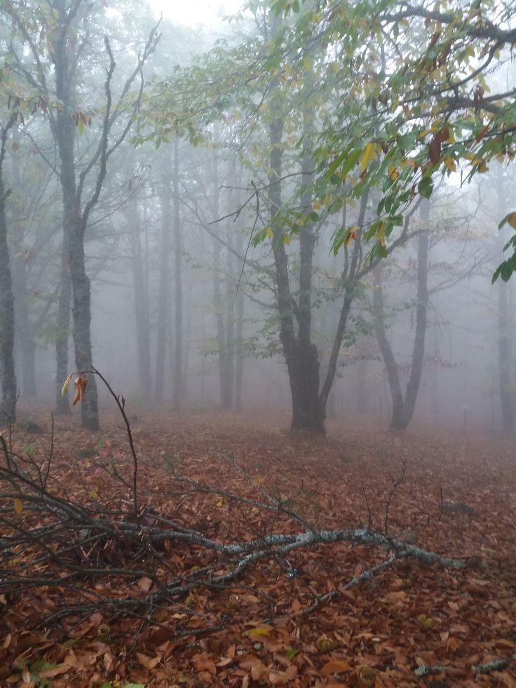 Sierra de San Vicente (Toledo) - Entre nieblas y castaños (2)
