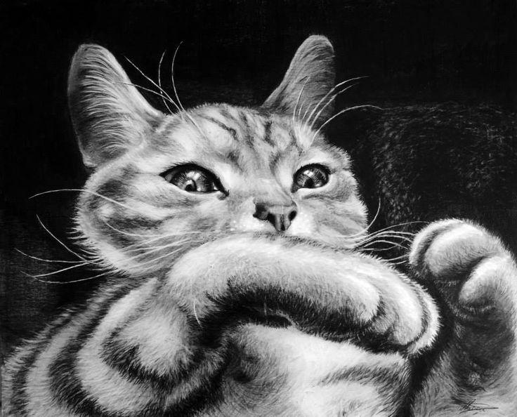 Animal drawing - Little Cat feeling cozy https://www.facebook.com/StefanMarcuArt