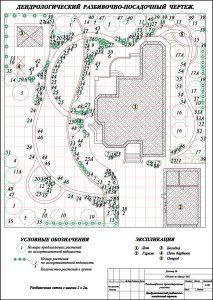 Дендроплан. Это план размещения всех растений с нумерацией, соответствующей ассортиментной ведомости.