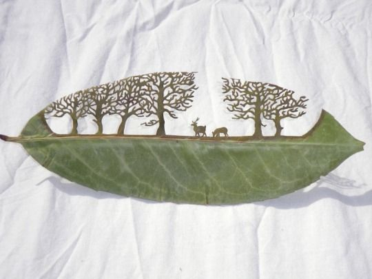 1枚の小さな葉っぱに広がる繊細な切り絵の世界「Naturayarte 」