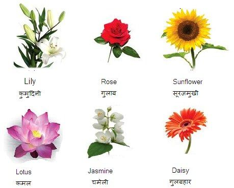 flowers name in hindi with english with pictures flower