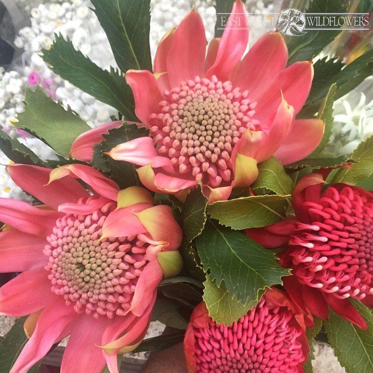 PINK WARATAH (Telopea) bouquet