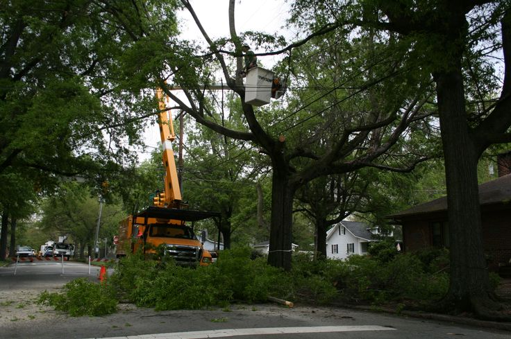 Tree removal, especially in situations where trees are close to utility power lines can be dangerous. Tall Timbers Tree Services have years of experience with these situations and have standard procedures to ensure that your tree(s) will be removed safely. We have the necessary heavy equipment like crane, ensuring the safety of nearby people and properties. Give us a call today +61414627627 or visit our website https://talltimberstreeservices.com.au/.