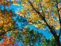 YRKESBEVIS I BESKÄRNING & TRÄDVÅRD - Vi på trädgårdsakademin håller utbildning i trädvård. Vi ser lärandet som något kul och vill gärna utbilda dig. Välkommen! http://trga.se/utbildning/yrkesbevis-i-beskarning-tradvard/