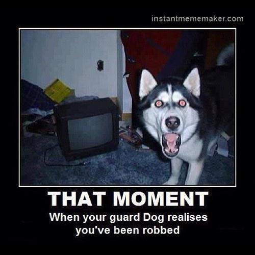 6b998f9abdfb860240656f1f57754c22 silly meme meme maker 78 best animal memes images on pinterest animals, animal memes,Anteater Meme Generator