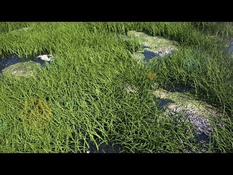 Creating Hyper Realistic Grass In 3D Studio Max 2015 & IRAY - YouTube