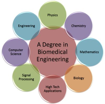 Biomedical Engineering what to major in