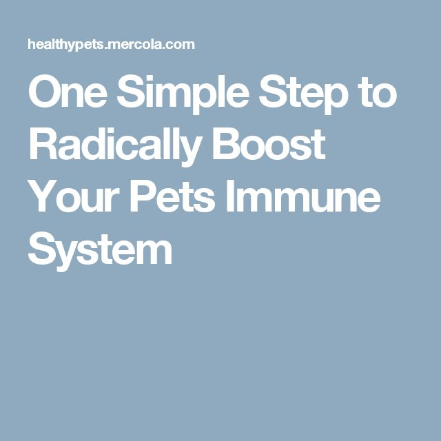 One Simple Step to Radically Boost Your Pets Immune System
