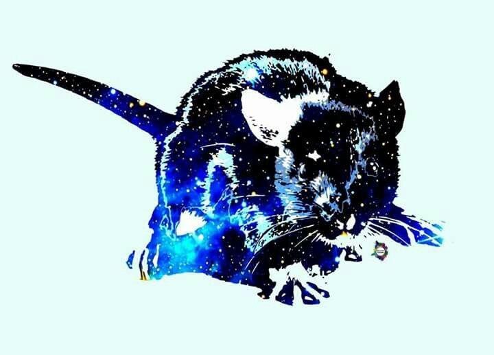 Galaxy Rat