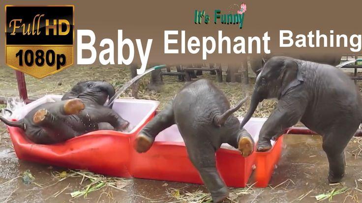 Funny Baby Elephant Bathing - HD - 1080p  PRECIOUS PRECIOUS PRECIOUS!   ✎・✿.。.:* ♡LOVE♡