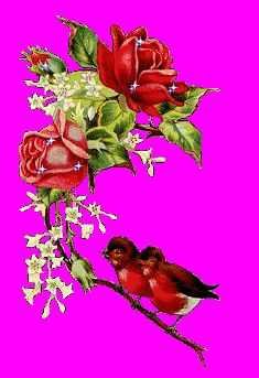 Images that move and sparkle Birds and rose bush