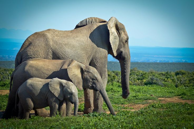 """Photographed at Addo, South Africa ----""""small, medium, and large!"""" --Photography by Korli Swart"""
