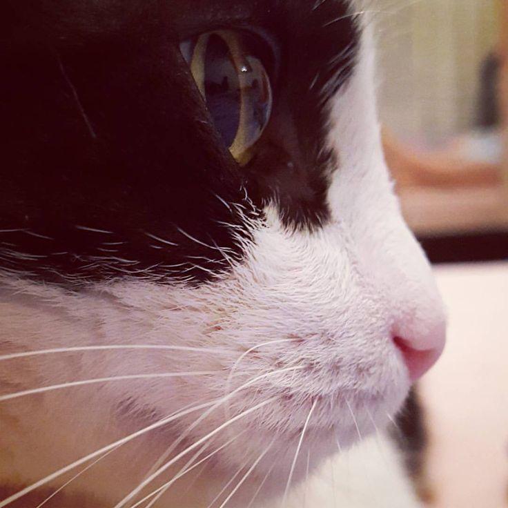 Bun de pus pe monedă  #Alecu #profile #cat #catofinstagram #rogue #beast #brasov #ig_brasov #instacat #eyes #feline