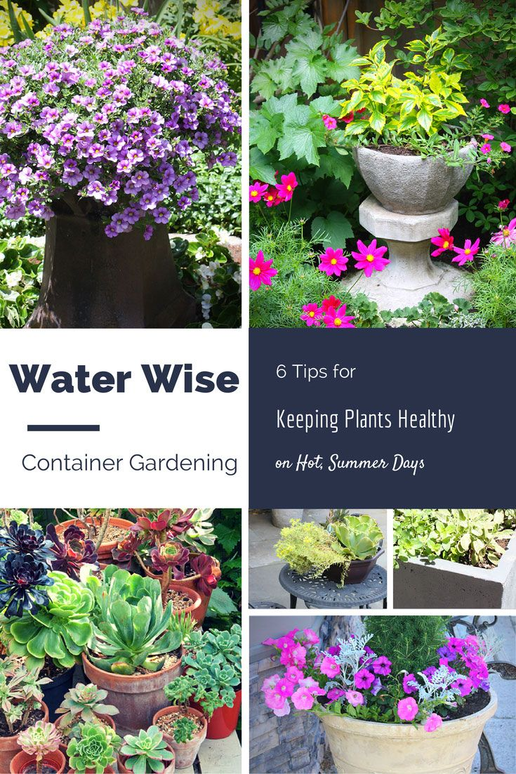 Save water this Summer with these container gardening tips! #container #garden #planting #vegetable #watering #save