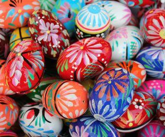 Poulettes et cocottes, ne couvez plus les œufs des vilains coqs!