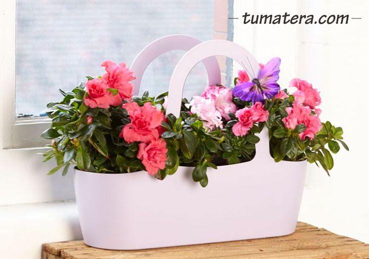 Ideal para sembrar 3 plantas con Flor o 3 Aromáticas. Puedes ubicarlas encima de tus escritorios, mesas o colgarlas en la pared. Encuentralas en: http://www.tumatera.co/products/mpa-431634-cartera-jasmine-02/